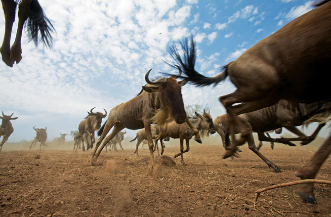 Super fotografii: Marile migratii - Poza 2