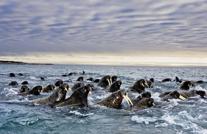 Super fotografii: Marile migratii - Poza 3