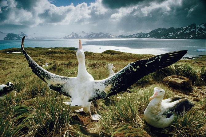 Super fotografii: Marile migratii - Poza 6