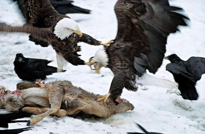 Super fotografii: Marile migratii - Poza 11