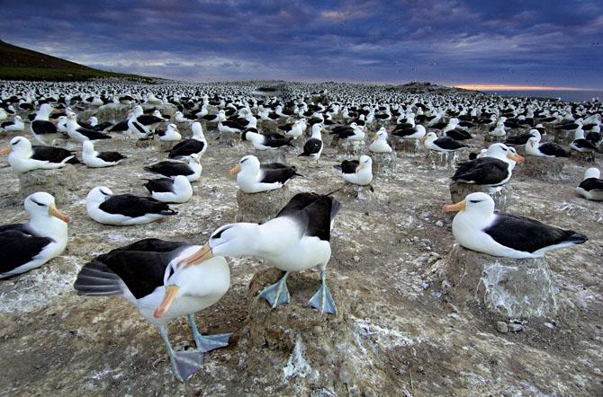Super fotografii: Marile migratii - Poza 16