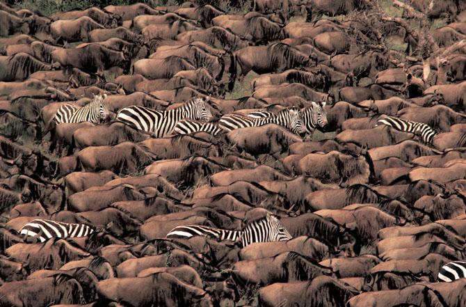 Super fotografii: Marile migratii - Poza 24