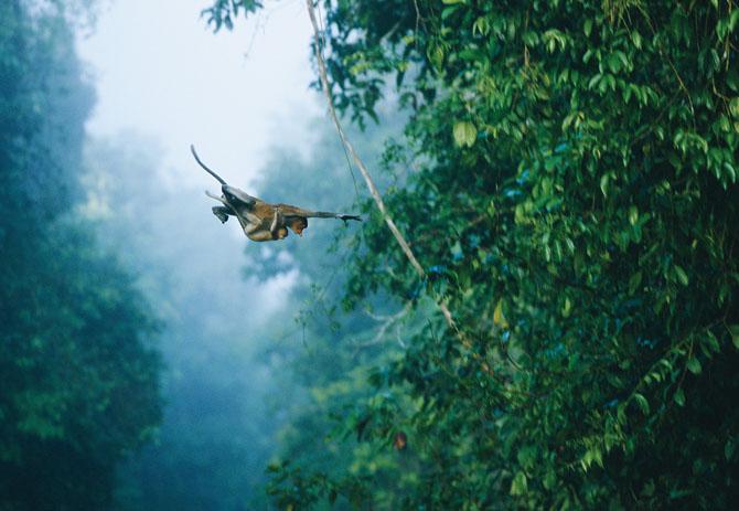 Super fotografii: Marile migratii - Poza 28