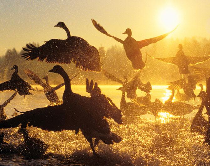 Super fotografii: Marile migratii - Poza 29