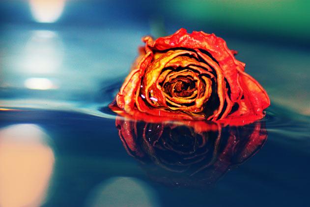 38 de fotografii minunate facute de o romanca de 18 ani! - Poza 7