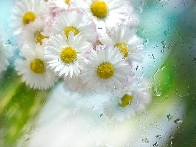 25 de poze superbe cu flori - Poza 10