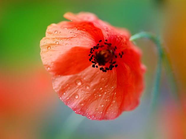 25 de poze superbe cu flori - Poza 12