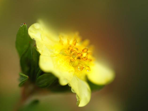 25 de poze superbe cu flori - Poza 13