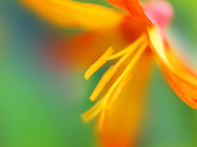 25 de poze superbe cu flori - Poza 14