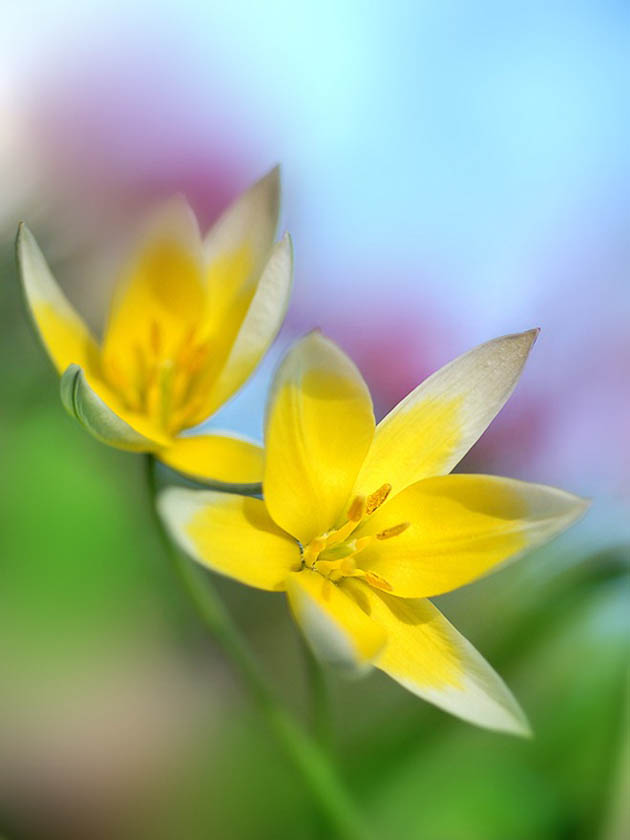 25 de poze superbe cu flori - Poza 15