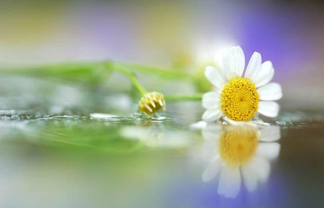 25 de poze superbe cu flori - Poza 18