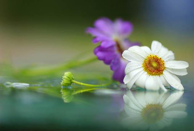 25 de poze superbe cu flori - Poza 19