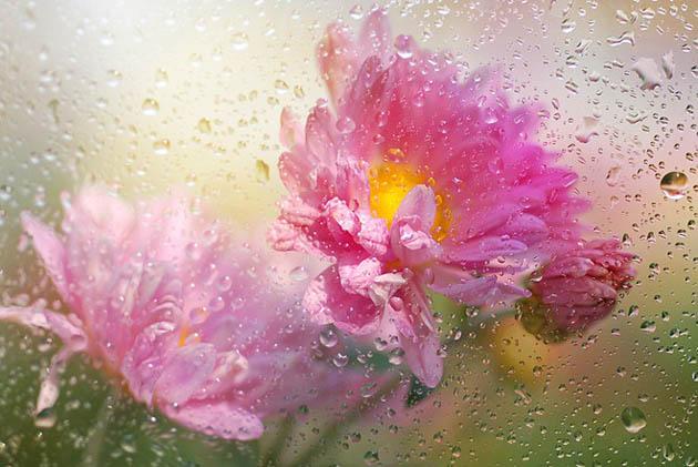 25 de poze superbe cu flori - Poza 2