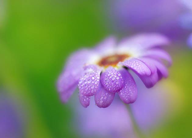 25 de poze superbe cu flori - Poza 20