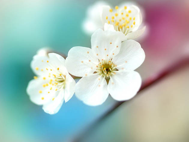 25 de poze superbe cu flori - Poza 21