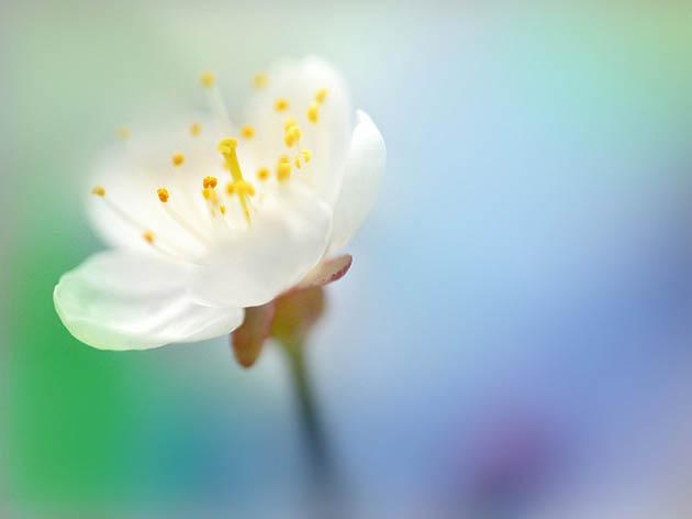 25 de poze superbe cu flori - Poza 22