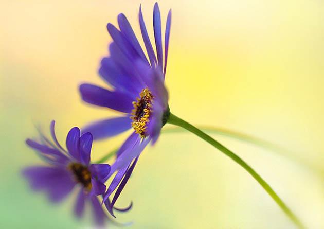 25 de poze superbe cu flori - Poza 23