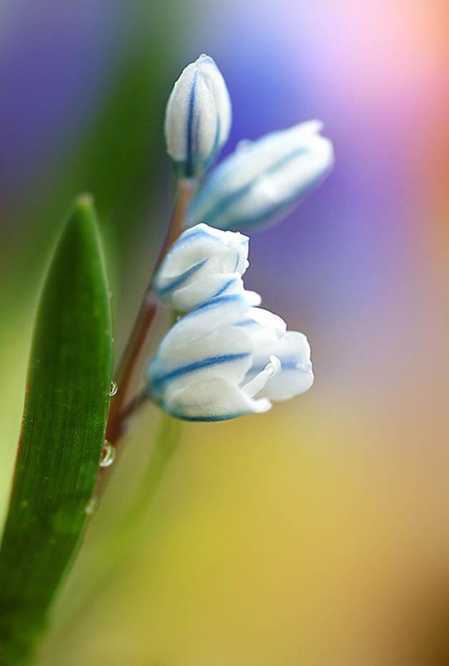 25 de poze superbe cu flori - Poza 24
