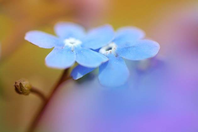25 de poze superbe cu flori - Poza 25