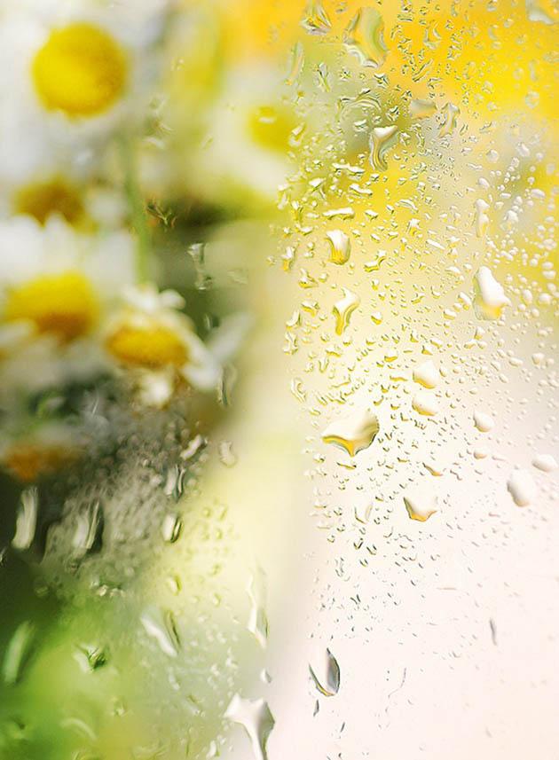 25 de poze superbe cu flori