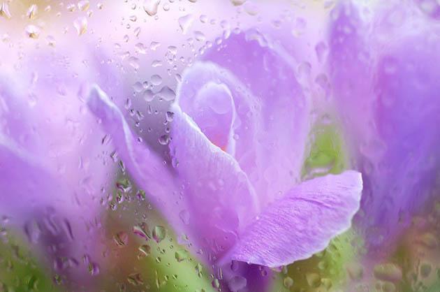 25 de poze superbe cu flori - Poza 4