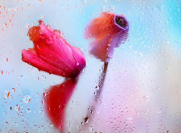 25 de poze superbe cu flori - Poza 7