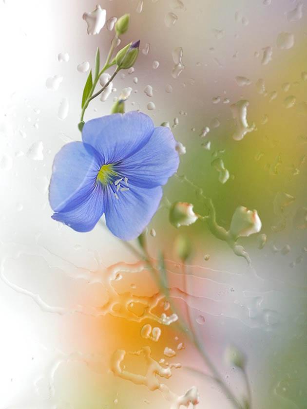 25 de poze superbe cu flori - Poza 8