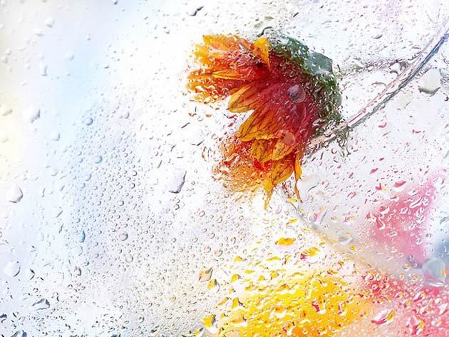 25 de poze superbe cu flori - Poza 9