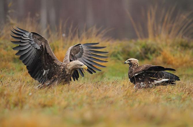 Oare la ce se gandeste vulturul? - Poza 12