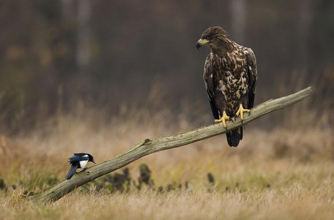 Oare la ce se gandeste vulturul? - Poza 1