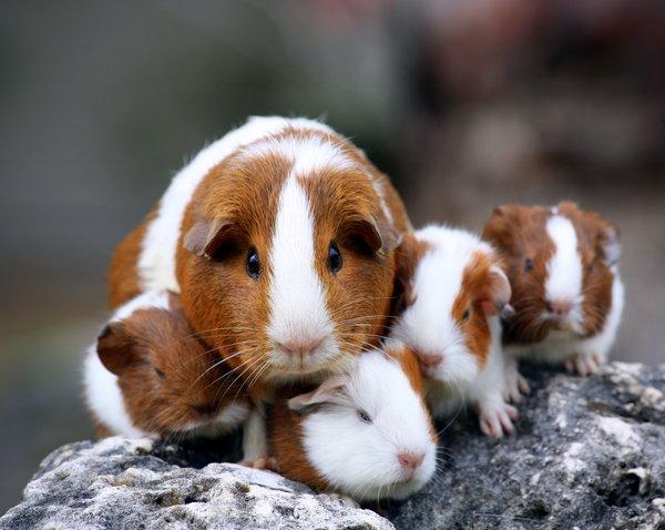 Atentie: Animale simpatice in 45 de poze! - Poza 31