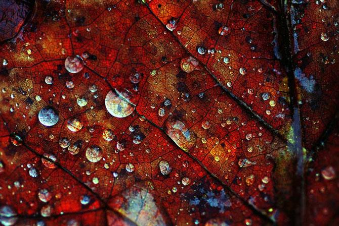 27 de fotografii fermecatoare de Samantha Meglioli - Poza 1
