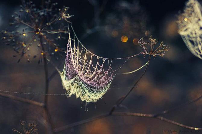 27 de fotografii fermecatoare de Samantha Meglioli - Poza 13