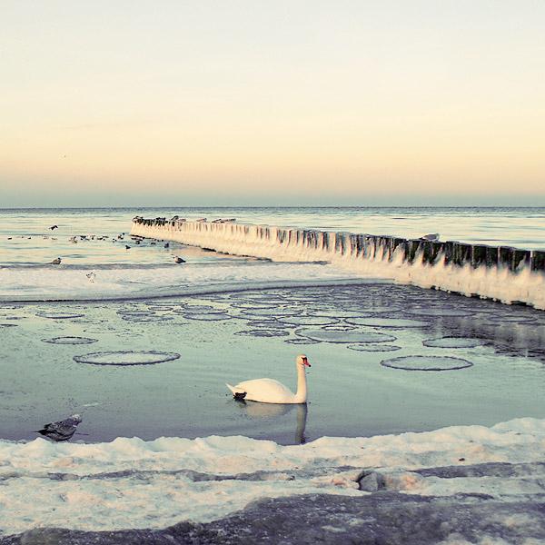 30 de fotografii superbe by Megson - Poza 19