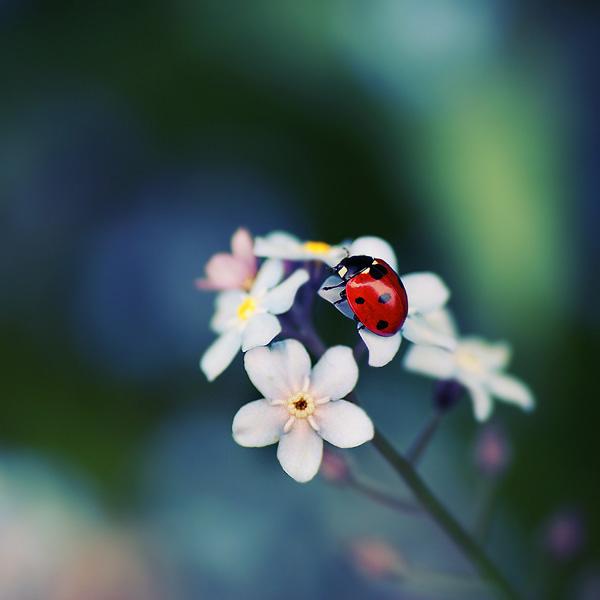 30 de fotografii superbe by Megson - Poza 11