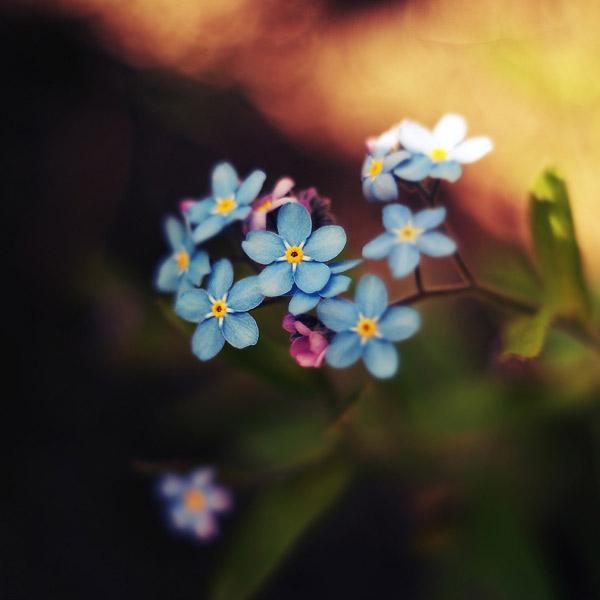 30 de fotografii superbe by Megson - Poza 7