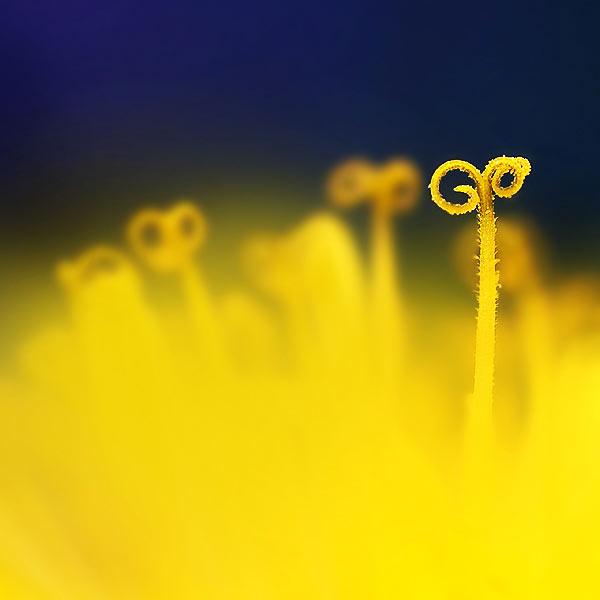 30 de fotografii superbe by Megson - Poza 21