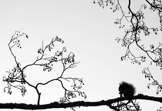 32 de fotografii minunate de Mikko Lagerstedt - Poza 3