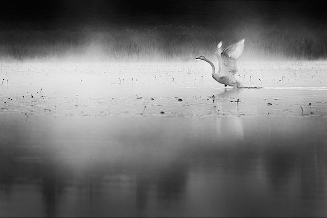 32 de fotografii minunate de Mikko Lagerstedt - Poza 5