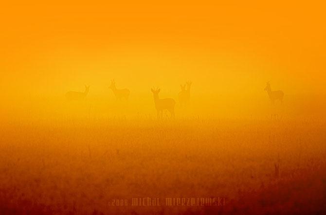 20 de fotografii incantatoare de Michal Mierzejewski - Poza 11