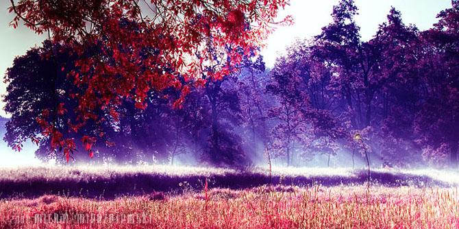 20 de fotografii incantatoare de Michal Mierzejewski - Poza 4