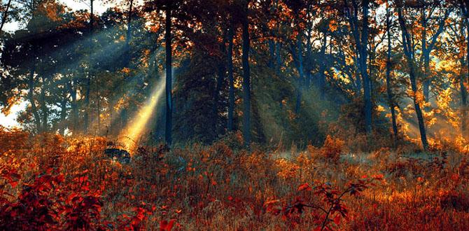 20 de fotografii incantatoare de Michal Mierzejewski - Poza 7