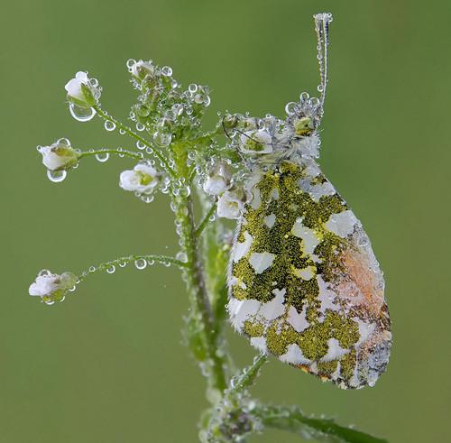 47 imagini cu roua, o splendoare naturala - Poza 35