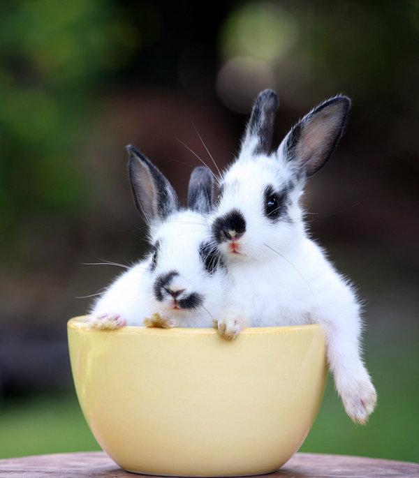 Atentie: Animale simpatice in 45 de poze! - Poza 34