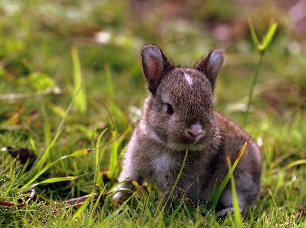 Atentie: Animale simpatice in 45 de poze! - Poza 35