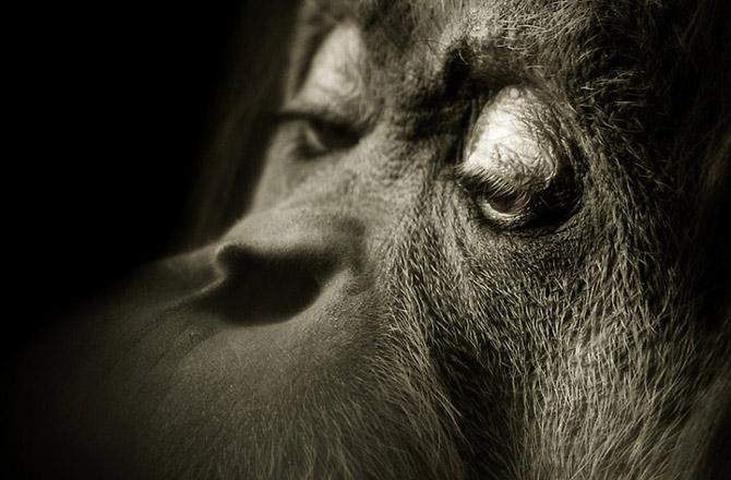 Fotografierea animalelor salbatice nu e o misiune intotdeauna facila