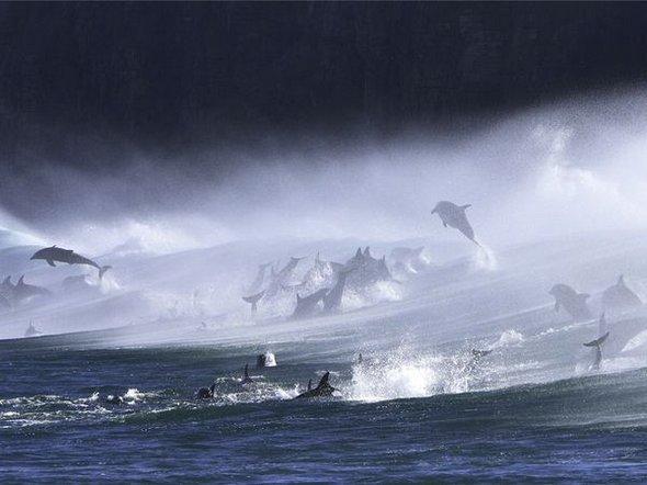 De vis: 35 de fotografii impresionante - Poza 10