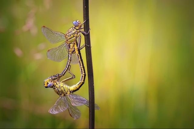 Fotografiile unei naturi demne de apreciat - Poza 15