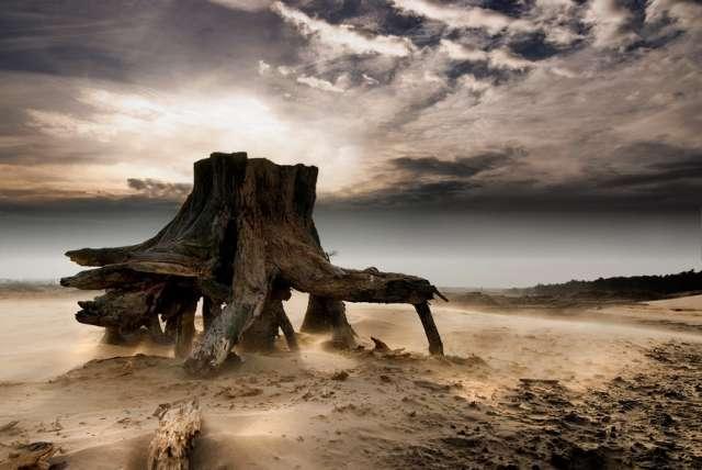 Fotografiile unei naturi demne de apreciat - Poza 17