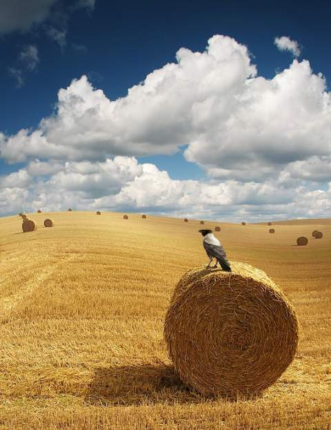Fotografiile unei naturi demne de apreciat - Poza 3